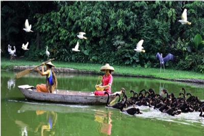 【广州】长隆野生动物园、珠海海洋王国、欢乐世界双卧6日游