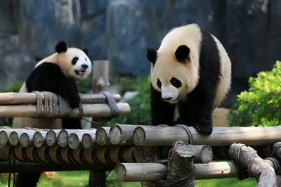 【尚品九寨】九寨沟/ 黄龙/熊猫乐园 /镰刀坝草原7日游