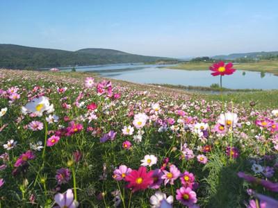 相约青龙山,畅游汉江绿谷,月亮湖采摘